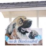 Blandinushof gastenverblijf en Leonberger kennel